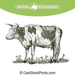 livestock., δραμάτιο , αγελάδα , ανάμιξη. , ζώο , μετοχή του...