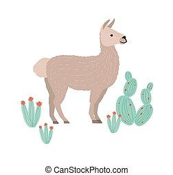 livestock., andino, cactuses., domestico, cria, lama,...