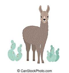 livestock., andino, cactuses., domestico, cria, ritratto,...