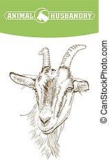 livestock., bosquejo, mano., goat, animal, dibujado, pasto
