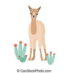 livestock., carino, andino, cactuses., domestico, cria,...