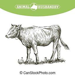 livestock., schizzo, mano., animale, disegnato, cattle., pascolo, vitello