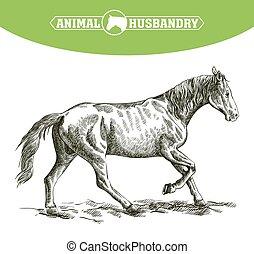 livestock., schizzo, mano., cavallo, correndo, animale, disegnato, pascolo