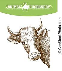 livestock., schizzo, mucca, mano., animale, disegnato, cattle., pascolo