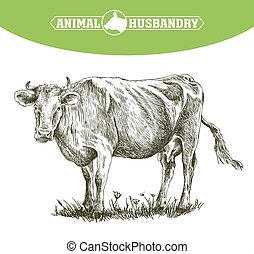 livestock., schizzo, mucca, mano., animale, disegnato,...