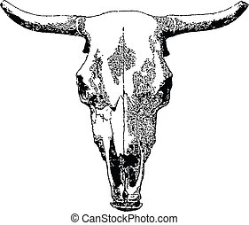 Livestock skull. - Vector livestock skull isolated on white...