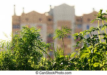 Living greenery on the windowsill