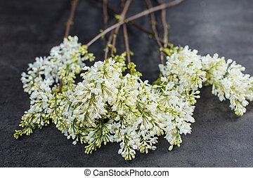 livraison, beau, bouquet, lilac., fleur, blanc
