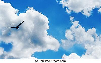 livre, como, um, pássaro