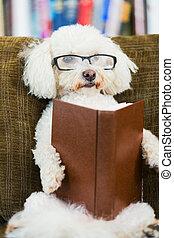 livre, lecture, chien