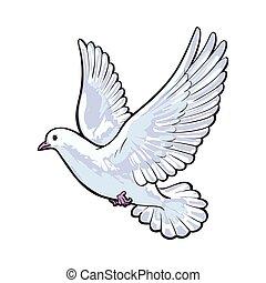 livre, voando, pombo branco, isolado, esboço, estilo, ilustração