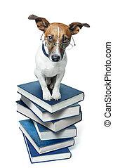 livro, cão, pilha