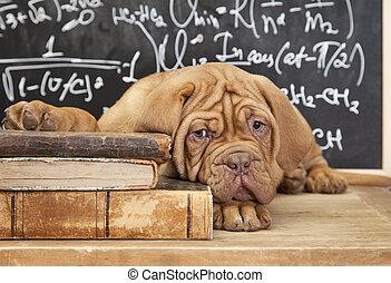 livros, pilha, filhote cachorro