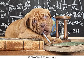 livros, pilha, filhote cachorro, francês, mastiff