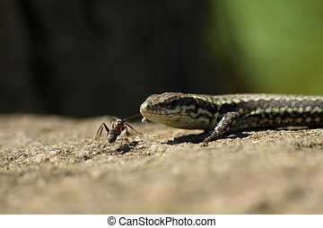 Lizard and ant, reptile