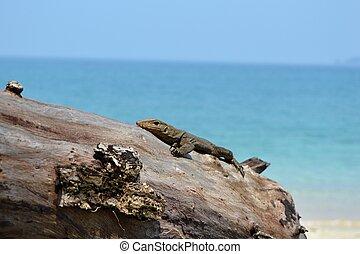 Lizard at the beach