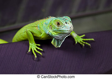 Lizard, bright colorful vivid theme