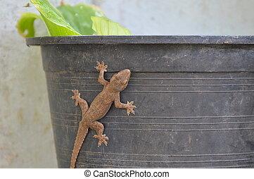 lizard climbing on flowerpot - lizard climbing on plastic ...