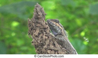 Lizard Eating Bug - A lizard patiently waits while a bug ...