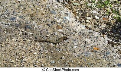 lizard eats small larva 4k