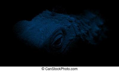 Lizard Face In The Dark - Closeup of lizard face at night