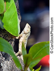 lizard in nature climbs on the tree