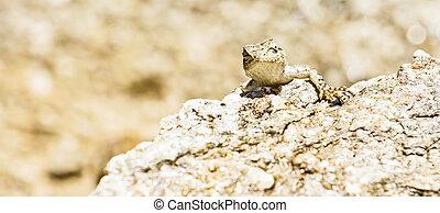 Lizard in the Desert Heat