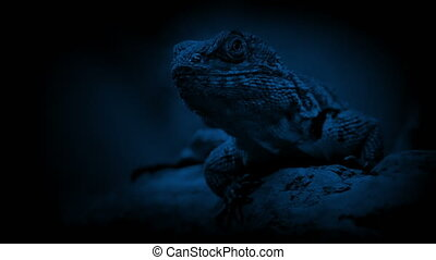 Lizard In The Jungle At Night Lizard rests on tree branch in...