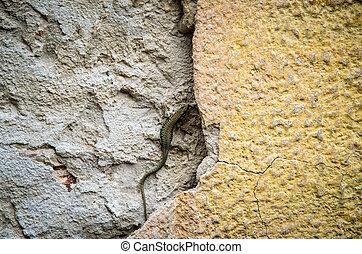 lizard in the wall - lizard crawling in the wall