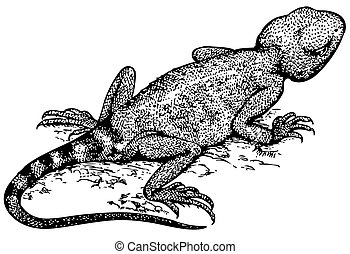 Lizard lying on the ground
