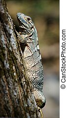 Lizard on a tree.