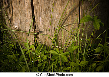 Lizard on a tree stump in the grass