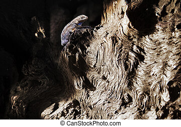 Lizard on a tree trunk