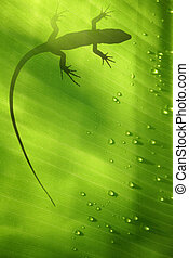 Lizard on Leaf - Banana leaf backlit with water drops and...
