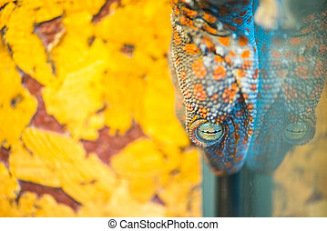 Lizard on the background of yellow wall