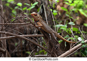 Lizard on the branches