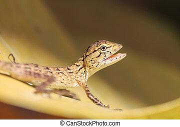 Lizard on tree leaf