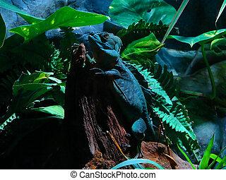 lizard - photo of lizard on a tree