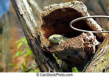 lizard sitting in dry landscape