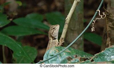 Lizard sitting on a thin branch