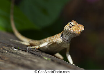 Lizard sitting on a tree stump.