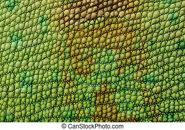 Lizard skin - close-up view on veiled chameleon skin