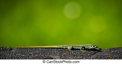 lizard soaking up the sun with a lot of negative space