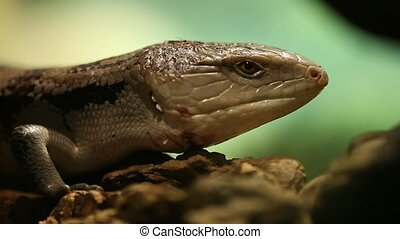 lizard - Taken with a tripod