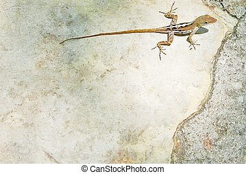 Lizard with a long tail on stone Spain with copy space