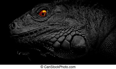Lizard With Fiery Eyes - Lizard looks around with bright...