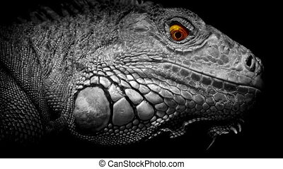 Lizard With Glowing Eyes Abstract - Lizard looks around with...
