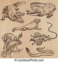 Lizards - An hand drawn vector pack