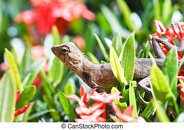 Lizards on red flower