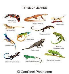 Lizards vector set in flat style design. Different kind of lizard reptile species icons collection.